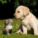 pup+and+kitten